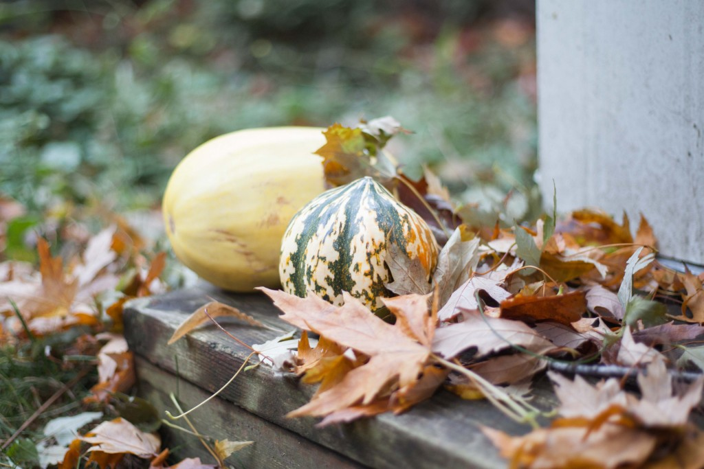 20161030fall-mtl-veg-winter-squashjpg
